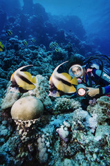 Egypt, Red Sea, Masked Butterflyfish and a diver
