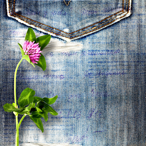 Beautiful pink clover on old jeans background © Loraliu