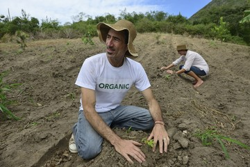 sustainable agriculture: organic farmers planting seedling
