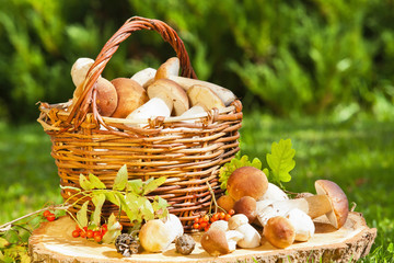 Natural background with mushrooms