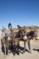 Carretto Kalahari tre cavalli