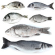 canvas print picture - Fresh fish isolated on white