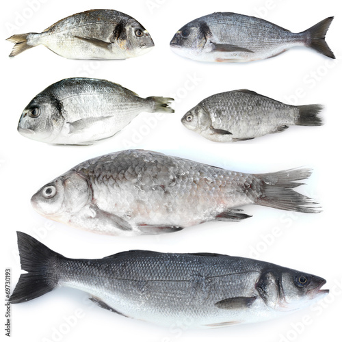 canvas print picture Fresh fish isolated on white