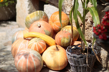 pile of pumpkins on stone wall background