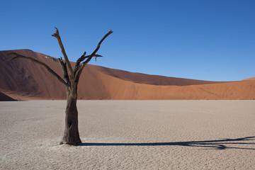 Acacia secca a deadvlei Namibia