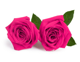 A couple gift roses on valentine day isolated on white backgroun