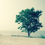 lonely tree in summer day background.Filtered image:cross proces