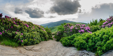 Rocky Trail through rhododendron garden.dng
