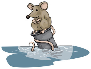 Lonely rat sitting on a floating can, in water
