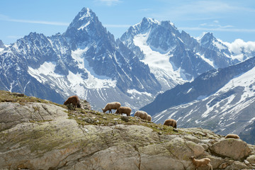The herd of sheeps on slope in mountains