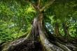 Leinwanddruck Bild - big old tree