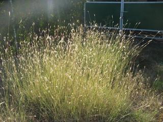 Кусты травы в ярком солнце