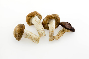 Dried Chinese mushroom on the White background