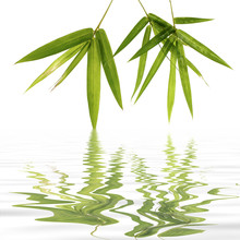 Young green bamboo leaves