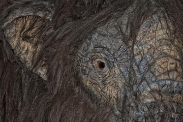 mammoth eye