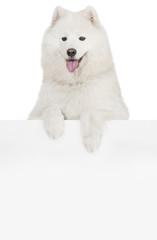 Dog above banner