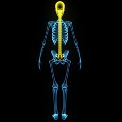 skull with backbone