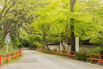 boulevard near Shimogamo Shrine