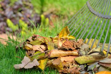 ratisser feuilles mortes