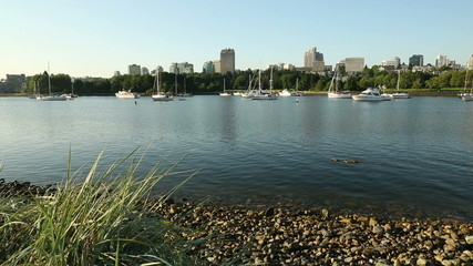 False Creek Ducks, Anchored Boats