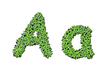 """Duckweed alphabet letters """"A"""" isolated on white background"""