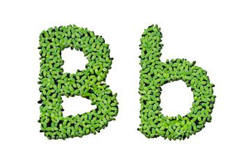 """Duckweed alphabet letters """"B"""" isolated on white background"""