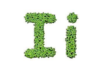 """Duckweed alphabet letters """"I"""" isolated on white background"""