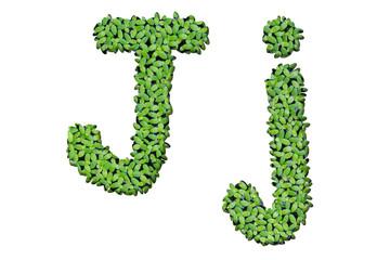 """Duckweed alphabet letters """"J"""" isolated on white background"""