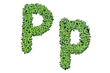 "Duckweed alphabet letters ""P"" isolated on white background"