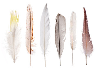 set of six straight feathers isolated on white