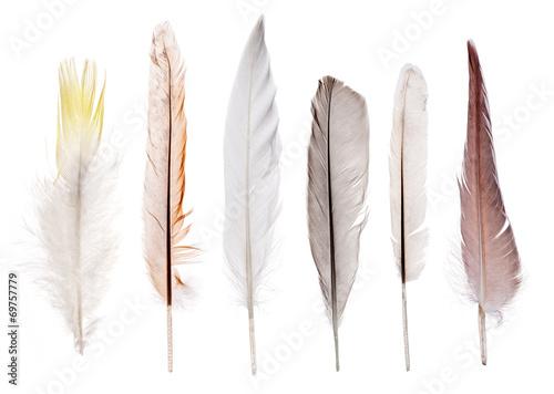 Deurstickers Zwaan set of six straight feathers isolated on white