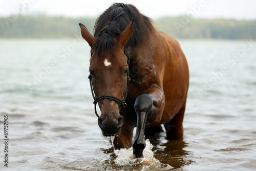 canvas print picture Pferd im See