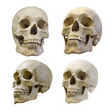 set of four human skull isolated on white