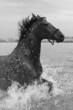 Pferd spritzt im See