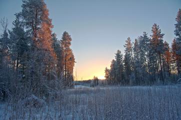 Winter landscape.Winter scene