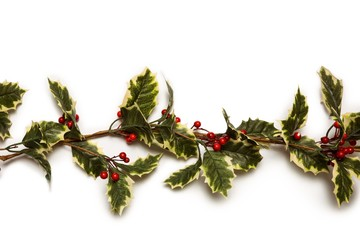 Christmas holly with red berrys