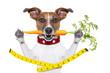 slim healthy dog