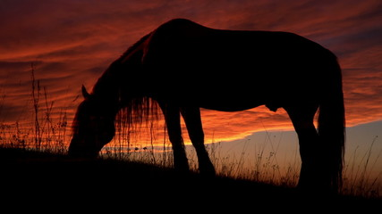 Horse Backlit Sunset