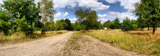 Panorama of meadow and forest road