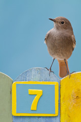 Bird perched on a fence decorated with number seven