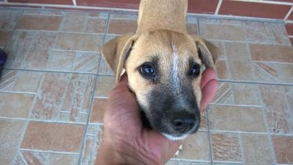 Kleiner Hund mit süßem Blick
