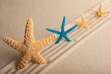 Four starfish in the sand