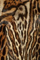 fur of ocelot