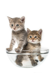 Cats in a salad-bowl