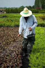 farmer using fertilizer