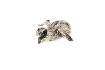 Newborn bird
