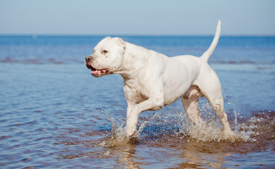 active dog on the beach
