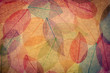 Autumn background - 69770586