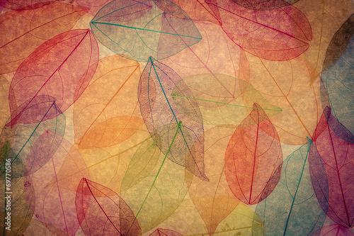 fototapeta na ścianę Jesień