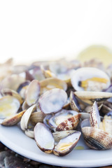 Cooked Clams isolated on white